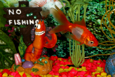 Fresh Water Aquariums - Better Pets and Gardens