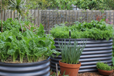 Raised Garden Beds Better Pets And Gardens