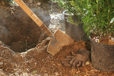 Transplanting Shrubs - Better Pets and Gardens