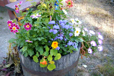 Wine Barrel Gardens Better Pets and Gardens