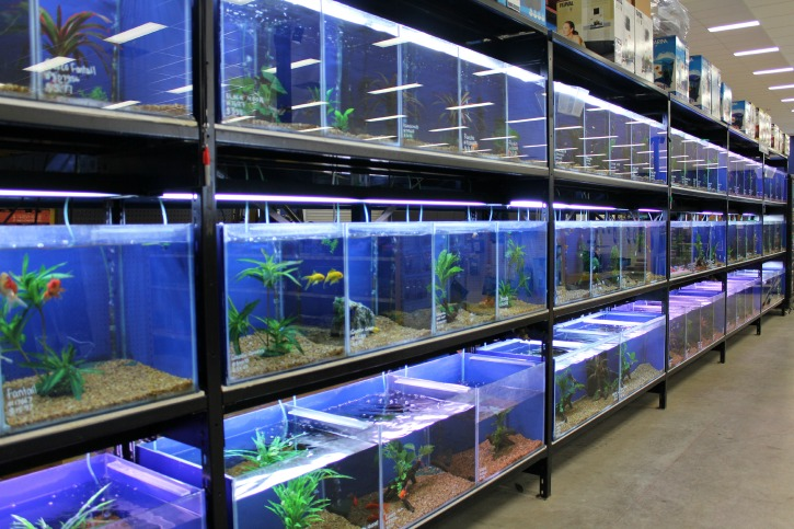 27 Fish tanks