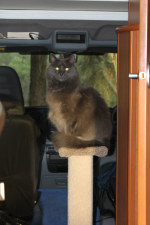 Bailey the Travelling Cat