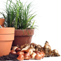 Bulbs_Pots_Square