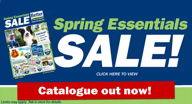 Spring Catalogue Sale