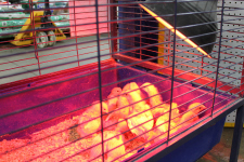 Chicks_Heater