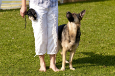 Dog training 3_web