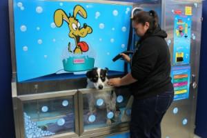 Dog wash_Canning Vale