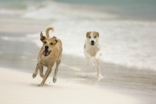 Dogs_beach_web
