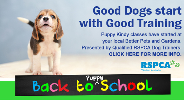 Puppy School RSPCA