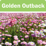 Golden Outback icon
