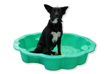 Lucy_Border Collie Kelpy Cross_2 years_Shell Bath_web