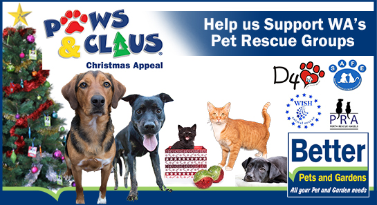 Paws & Claus Animal Rescue Appeal