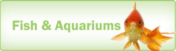 Pools and Aquariums 1