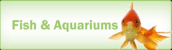 Pools and Aquariums 1