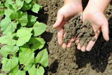 Seedlings_soil_web