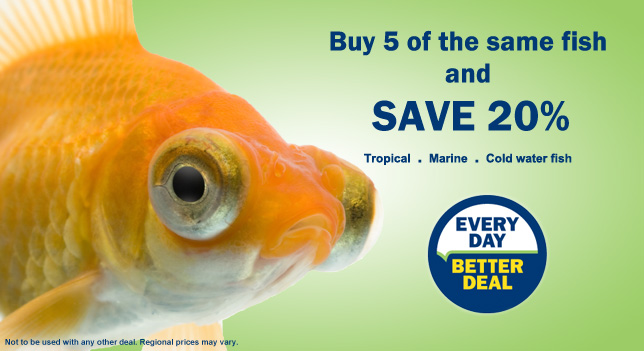 Buy 5 of the same fish and SAVE 20%