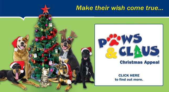 Paws & Claus Christmas Appeal