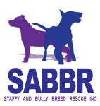 Staffy and Bully Breed Rescue