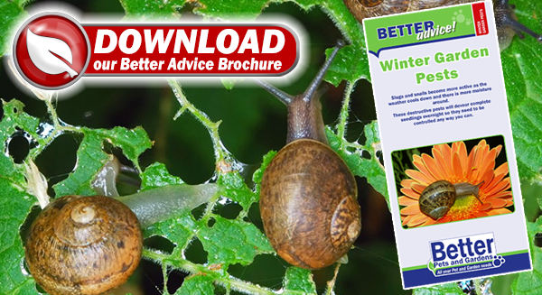 Winter Garden Pests Tips and Advice